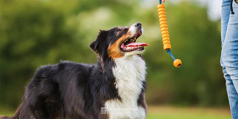 Hoe socialiseer ik mijn pup: het afleren van springen en aan de riem trekken? Nu is dat nog leuk, maar als de hond straks 30 kilo weegt?